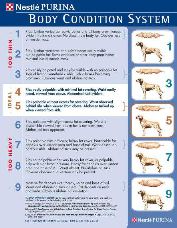 Purina Body Condition Score